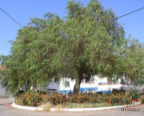 Rotunda com árvore.
