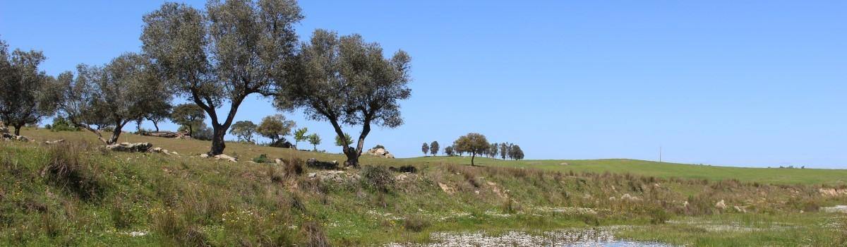 Paisagem com árvores e ceu azul