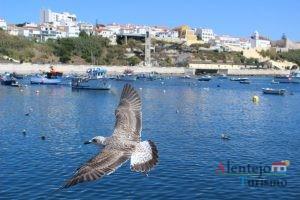 Gaivota, mar e cidade