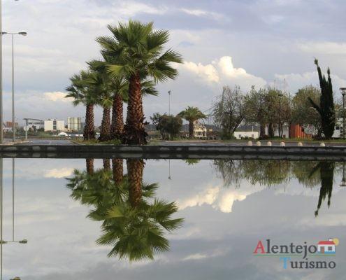 Reflexos de palmeiras