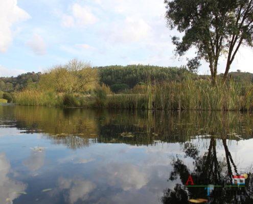 Árvore e vegetação refçetida na água