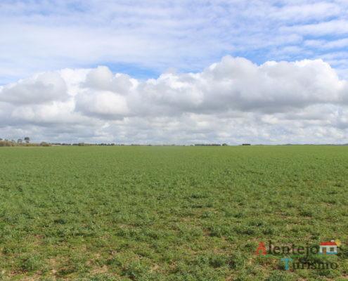 Campo verde e céu com nuvens
