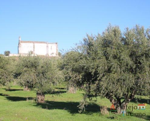 Ermida e oliveiras