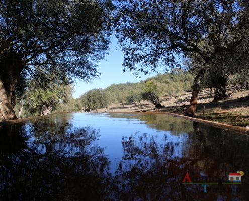 Natureza refletida na água