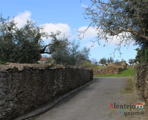 Rua tradicional alentejana: muros de pedra e oliveira
