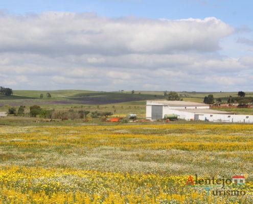 Campos com flores amarelas