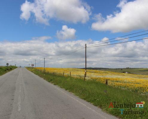 Estrada e campo amarelo