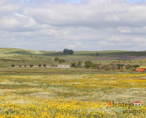 Campos amarelas