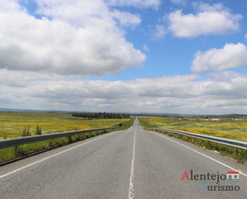Estrada com campos de flores amarelas
