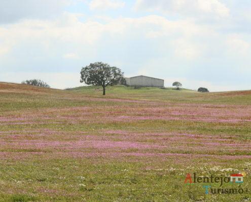 Campos cor de rosa