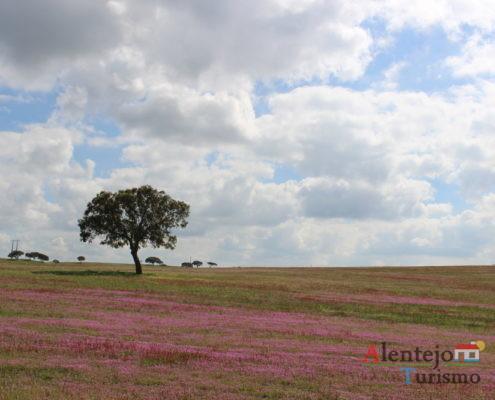 Campos com flores cor de rosa