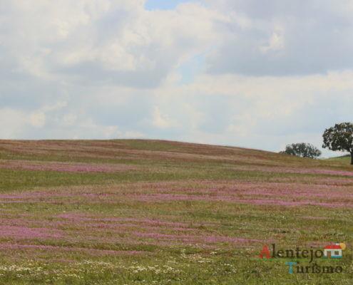 Campo cor de rosa