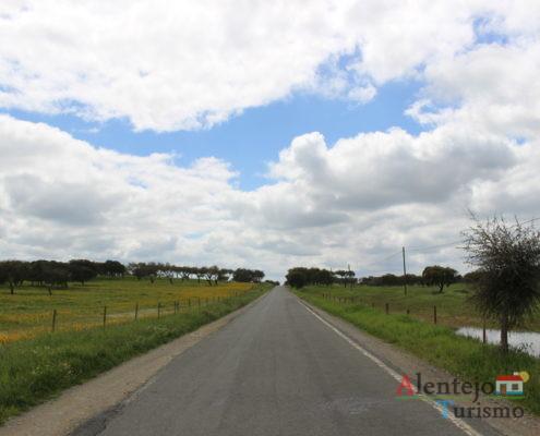 Estrada em campo florido