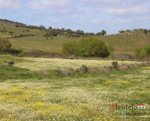 Campos com flores brancas e amarelas