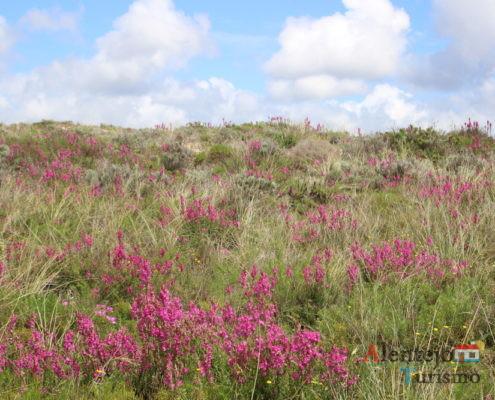 Rota M1109 - Dunas floridas - Parque Natural do Sudoeste Alentejano e Costa Vicentina