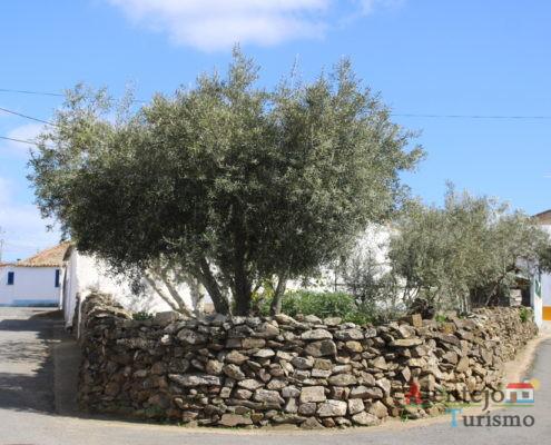Muro de pedra e oliveira