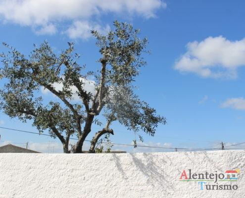 Quintal com oliveira