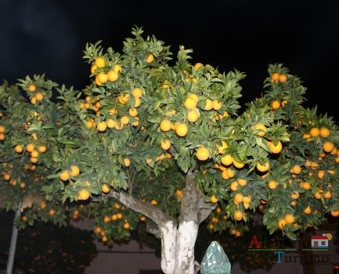 Laranjeira - Vila de Frades