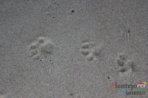 Pegadas de lontra