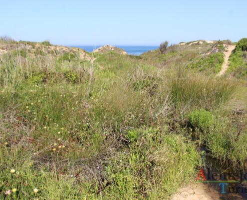 Praia da Foz do Burrinho:: caminho nas dunas.