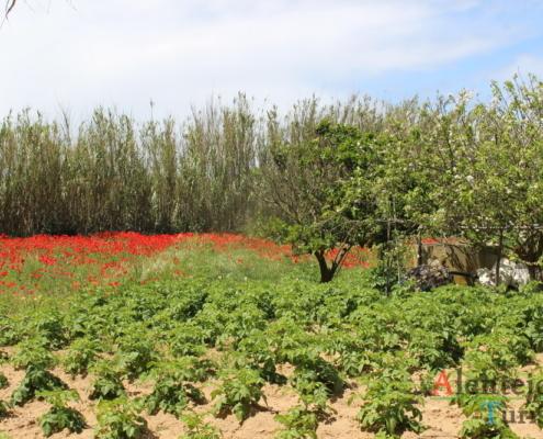 Horta e campo de papoilas - Parque Natural do Sudoeste Alentejano e Costa Vicentina