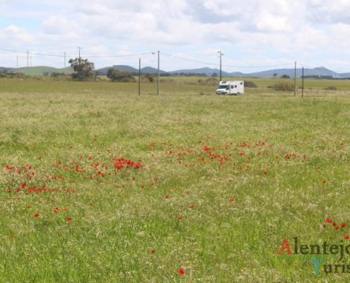Campo de papoilas - Parque Natural do Sudoeste Alentejano e Costa Vicentina