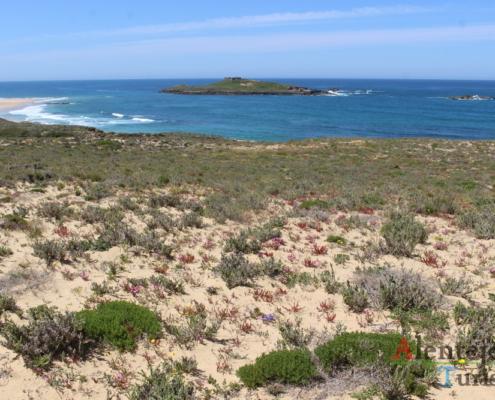 Ilha do Pessegueiro.
