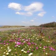 M1109 - campo florido e coração nuvem