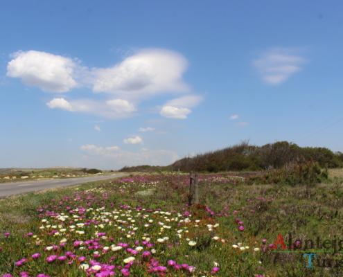 campo florido e nuvem