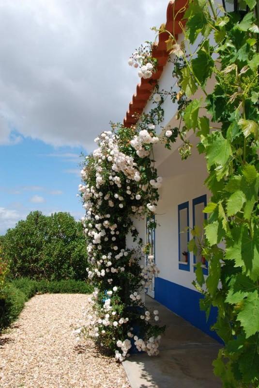 casa_fonte_da_perdiz_piçarras_castro_verde-43
