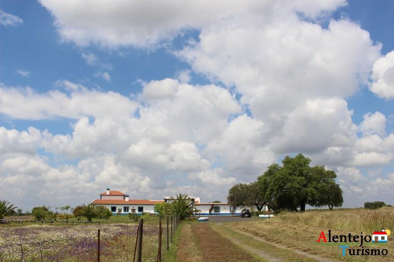 monte_da_azinheira_grande_concelho_de_ferreira_do_alentejo0181