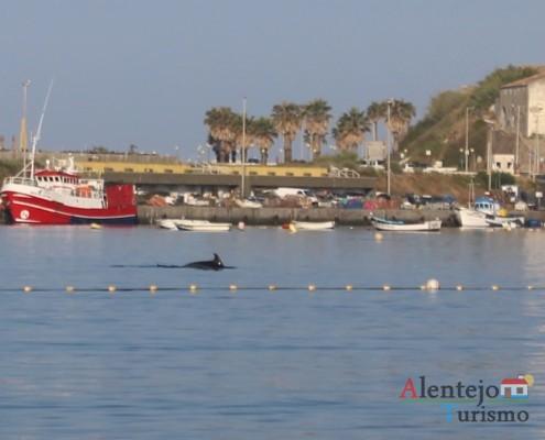 Golfinhos na praia Vasco da Gama - Baía de Sines - Concelho de Sines
