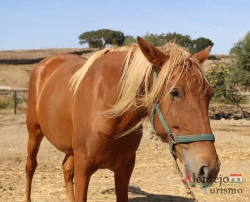 Égua - Museu vivo – Grandaços – Concelho de Ourique - Alentejo