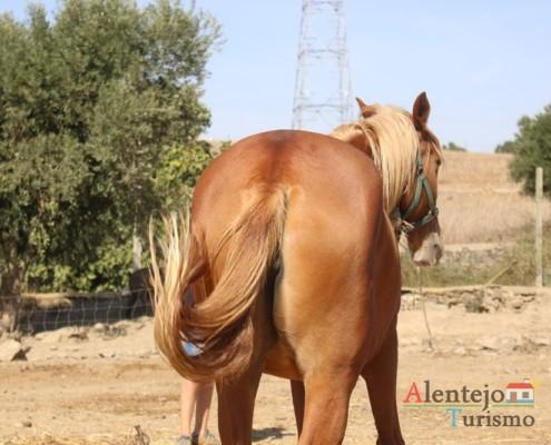 Rabo de cavalo - Museu vivo – Grandaços – Concelho de Ourique - Alentejo