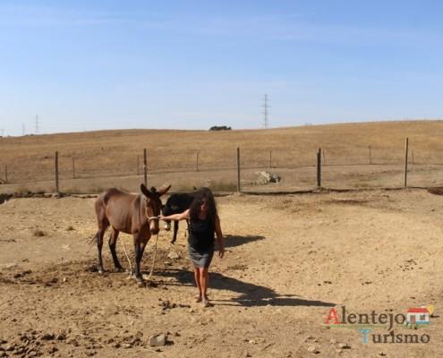 O AlentejoTurismo encontrou uma mula - Museu vivo – Grandaços – Concelho de Ourique - Alentejo