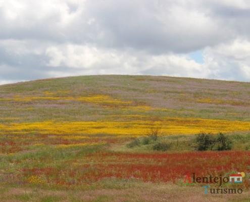 Campos na primavera – atubras ou trufas alentejanas - concelho de Mértola - Alentejo