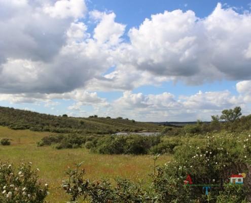 Estevas - campos na primavera - ida às atubras (trufas alentejanas) - concelho de Mértola - Alentejo