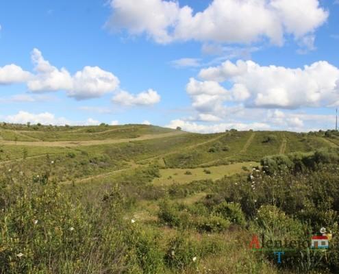 Estevas - Campos na primavera – atubras ou trufas alentejanas - concelho de Mértola - Alentejo