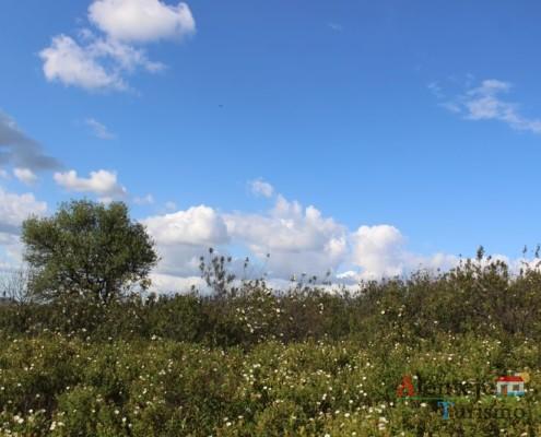 Esteva - campos na primavera - ida às atubras (trufas alentejanas) - concelho de Mértola - Alentejo