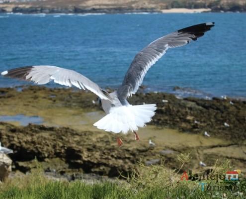 Ilha do Pessegueiro; Porto Covo; Concelho de Sines; Alentejo