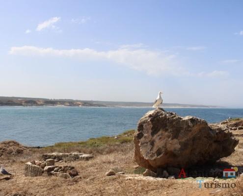 Gaivota; Ilha do Pessegueiro; Porto Covo; Concelho de Sines; Parque Natural do Sudoeste Alentejano e Costa Vicentina; Alentejo