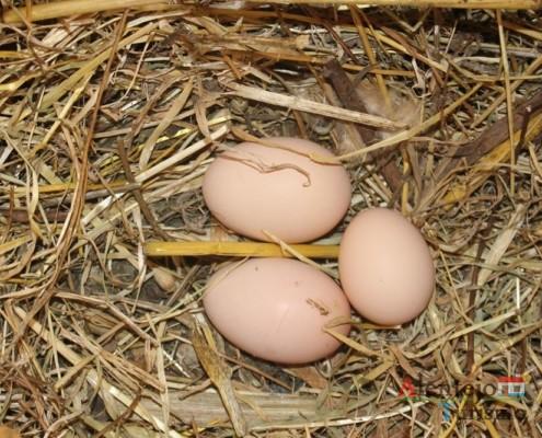 Ovos; Regréssimo; Geraldos; Concelho de Castro Verde; Alentejo