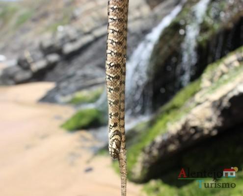 Cascatas das cobras – Praia da Amália – Concelho de Odemira