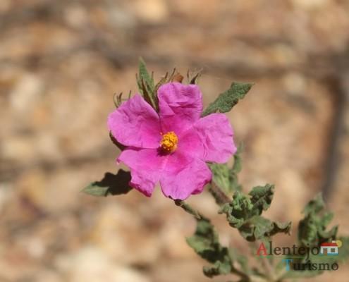 A flora; Concelho de Santiago do Cacém; Alentejo; AlentejoTurismo