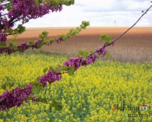 """20 - Exposição das fotografias concorrentes: """"Olhar a primavera, no Alentejo""""; I Concurso Fotográfico AlentejoTurismo"""