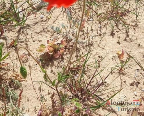 """28 - Exposição das fotografias concorrentes: """"Olhar a primavera, no Alentejo""""; I Concurso Fotográfico AlentejoTurismo"""