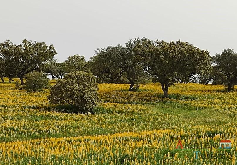 """33 - Exposição das fotografias concorrentes: """"Olhar a primavera, no Alentejo""""; I Concurso Fotográfico AlentejoTurismo"""