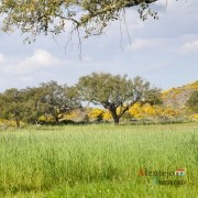 """57 - Exposição das fotografias concorrentes: """"Olhar a primavera, no Alentejo""""; I Concurso Fotográfico AlentejoTurismo"""
