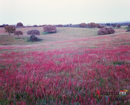 """12- Exposição das fotografias concorrentes: """"Olhar a primavera, no Alentejo""""; I Concurso Fotográfico AlentejoTurismo"""