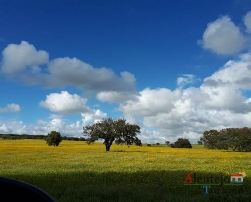 """15- Exposição das fotografias concorrentes: """"Olhar a primavera, no Alentejo""""; I Concurso Fotográfico AlentejoTurismo"""